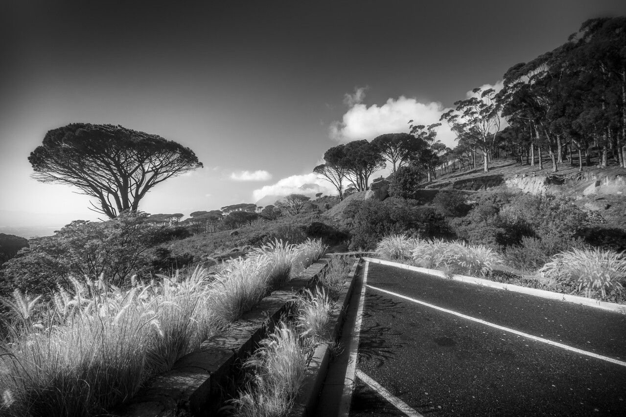 Dreamy Africa